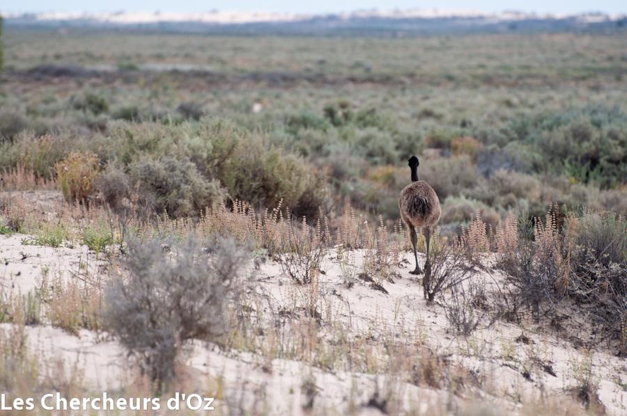 Emus 007