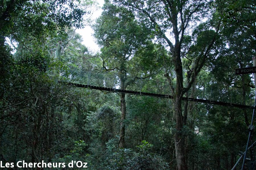 Tree top walk 001