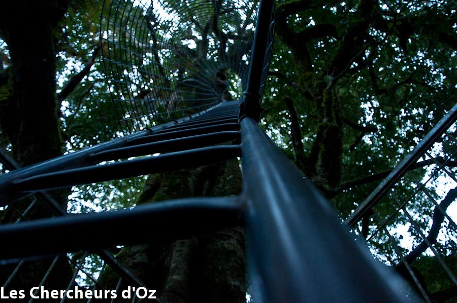 Tree top walk 005
