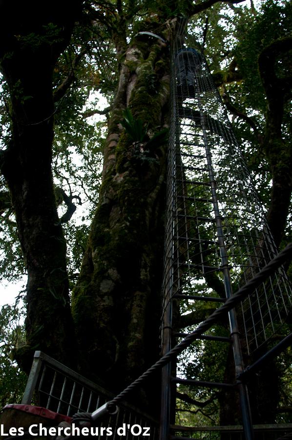 Tree top walk 016