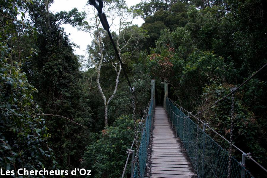 Tree top walk 018