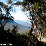 Blue mountains 013