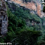 Blue mountains 024