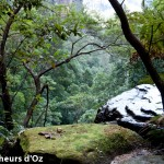 Blue mountains 027